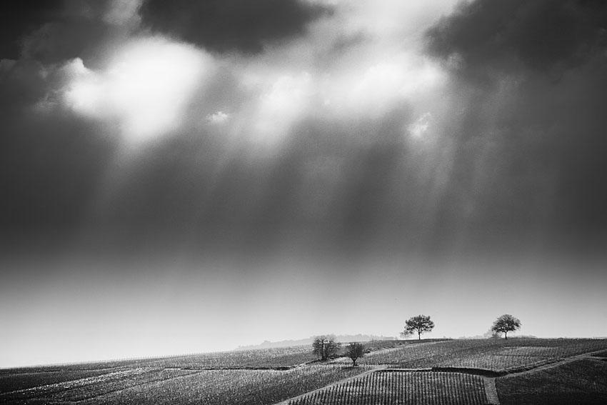 Vignes du Creusot sous le soleil